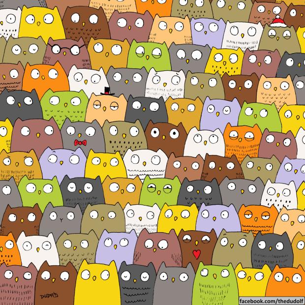buhos-gato